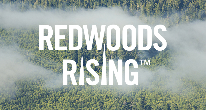 Redwoods Rising video image
